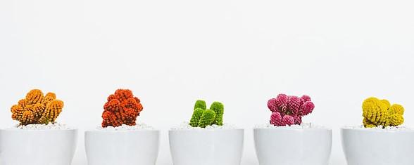 Coloured cactus