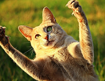 cat catching elusive keywords