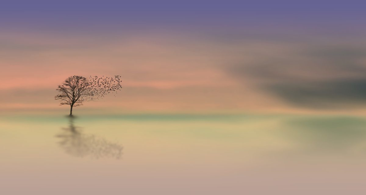 lone tree in pastel coloured dawn light