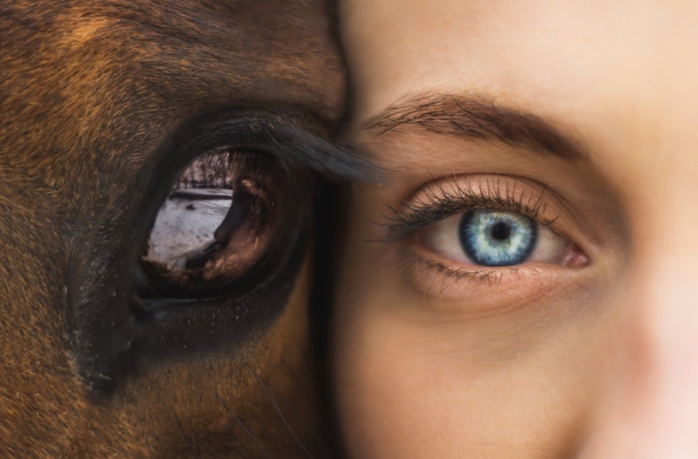 girl and horse eye