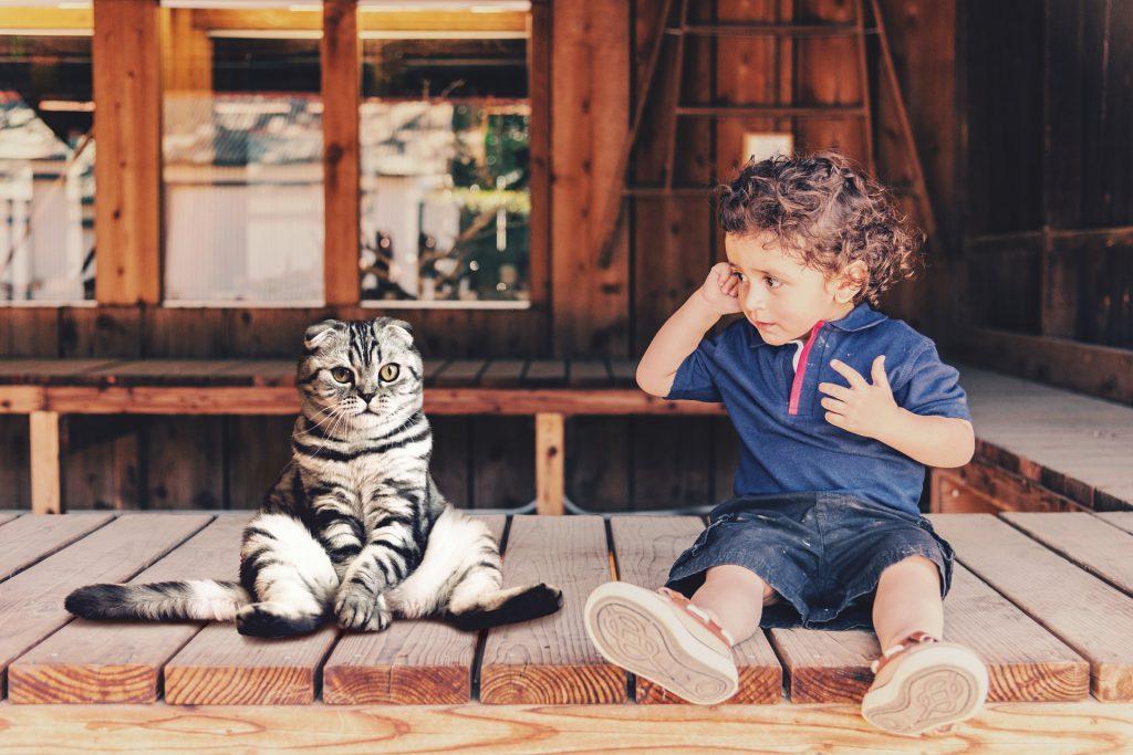 child with scottish fold cat sitting on veranda
